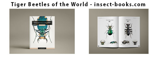 Tiger Beetles of the World